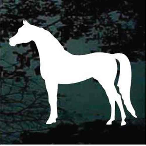 Arabian Horse Standing Silhouette
