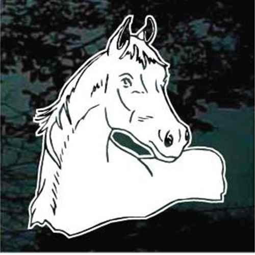 Detailed Arabian Horse Head