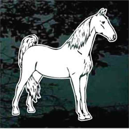 Tennessee Walking Horse Standing