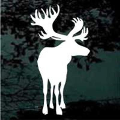 Moose (08)