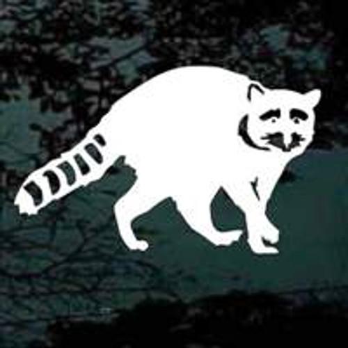 Raccoon 08