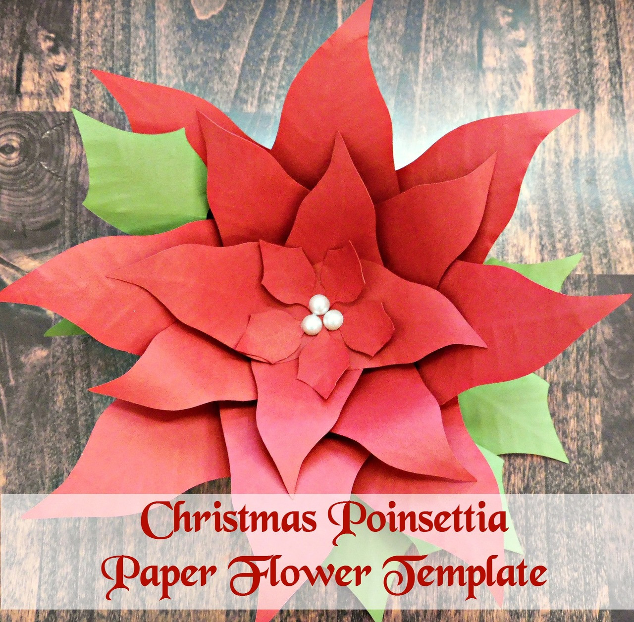 poinsettia flower template catching colorlfies