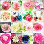 Diana rose, lotus, orchid, magnolia, anemone, mums, pomanders, ranunculus, jewel peony, ruffle dahlia, angel cheek peony, tulip peony, poinsettia, ruby rose, ruffle rose.