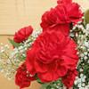 Hashtag XOXO Bouquet (SCF5604)