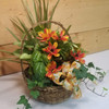 Summer Smiles Dish Garden (SCFDG13) by Savilles Country Florist.  Flower and Plant delivery to Orchard Park, NY and the surrounding area including same day delivery to Hamburg, West Seneca, East Aurora, Blasdell and Buffalo NY
