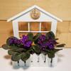 Violet Window Box  SCF6509