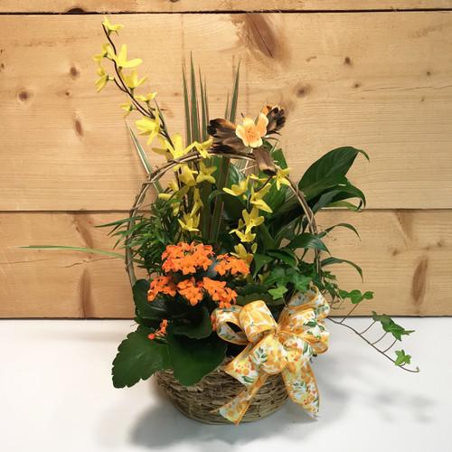 Spring Hummingbird Dish Garden - SCF18M02