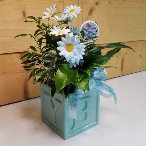 A Star is Born Planter (SCF18BB09) Savilles Country Florist Orchard Park, NY
