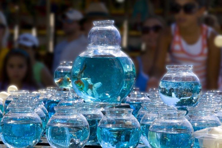 traditional-fishbowl-carnival-game.jpg