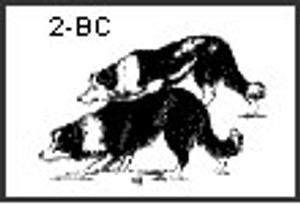 Note Cards with Two Border Collies