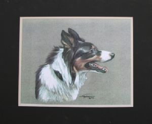 Tri Color Border Collie