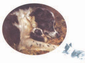 A Mothers Love Border Collie Note Card