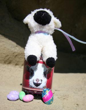 "Easter ""Sheepish Smile"" Mug & Clementine"