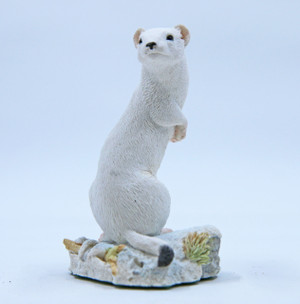 In Ermine