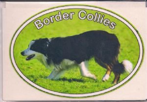 Border Collie Decal Sticker