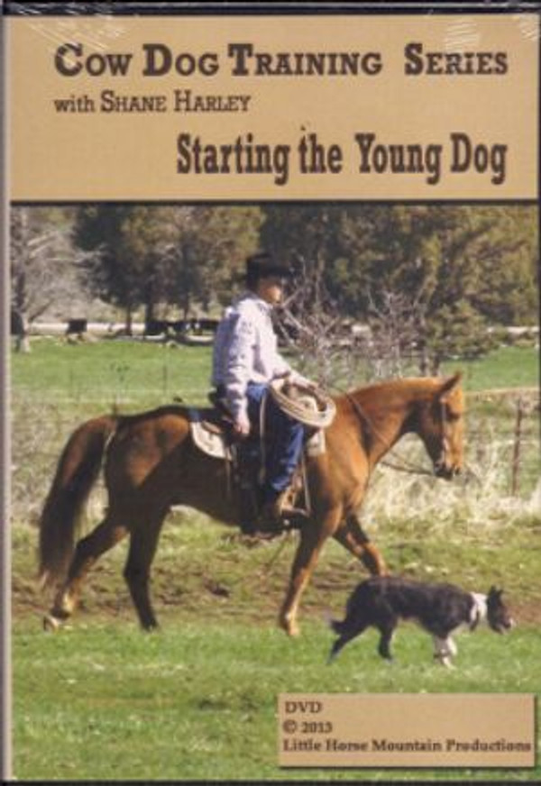 Starting the Young Dog with Shane Harley
