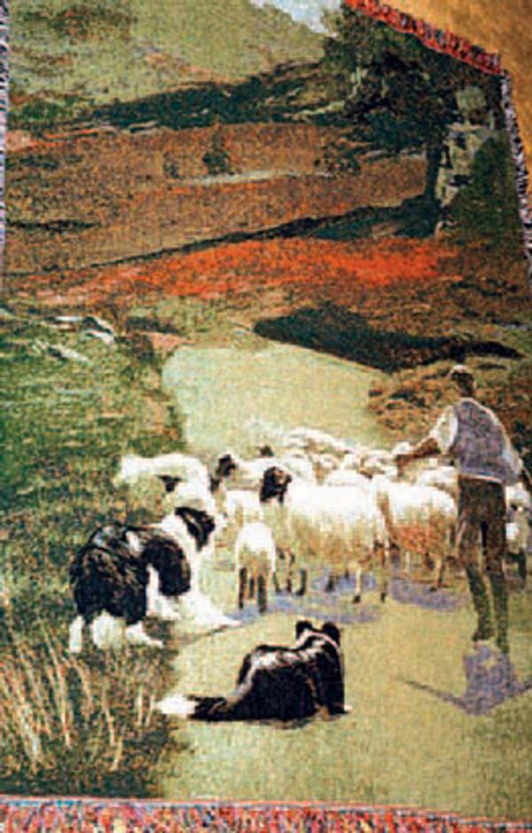 Shepherd Afghan