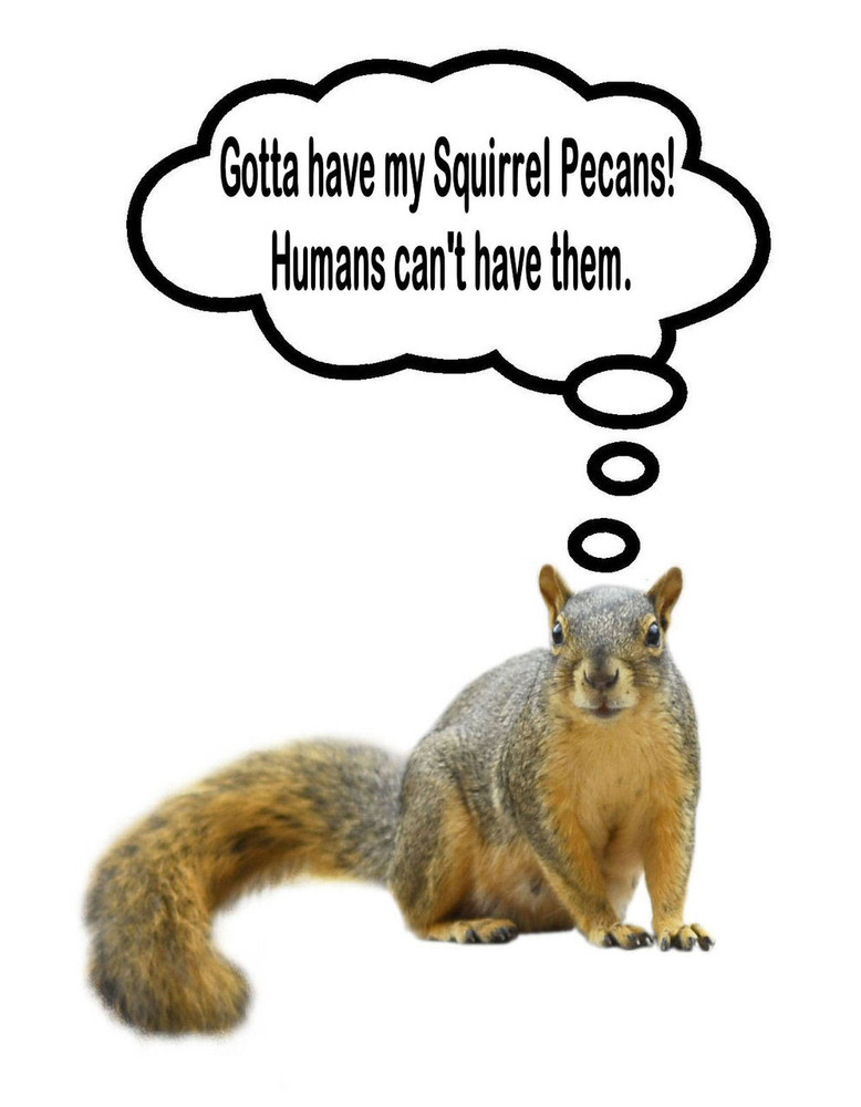 In-Shell Squirrel Pecans 25 lbs
