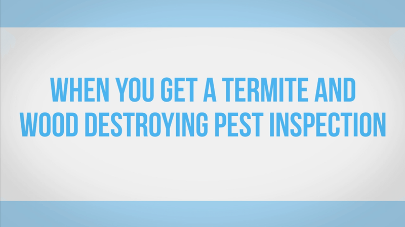 Termite Inspections Custom Video