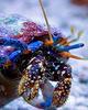 Leg Hermit Crab