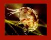 Amphipods & Copepods - 250