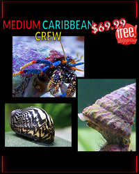 Medium Caribbean Crew