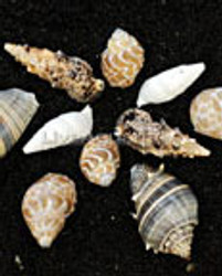 100 Empty Shells