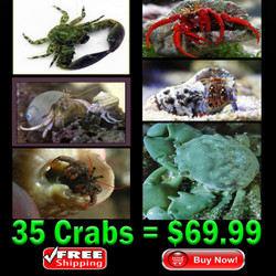 Saltwater Crab Crew - FREE shipping