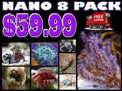 Spectacular Saltwater Nano 8 Pack - Ships Free