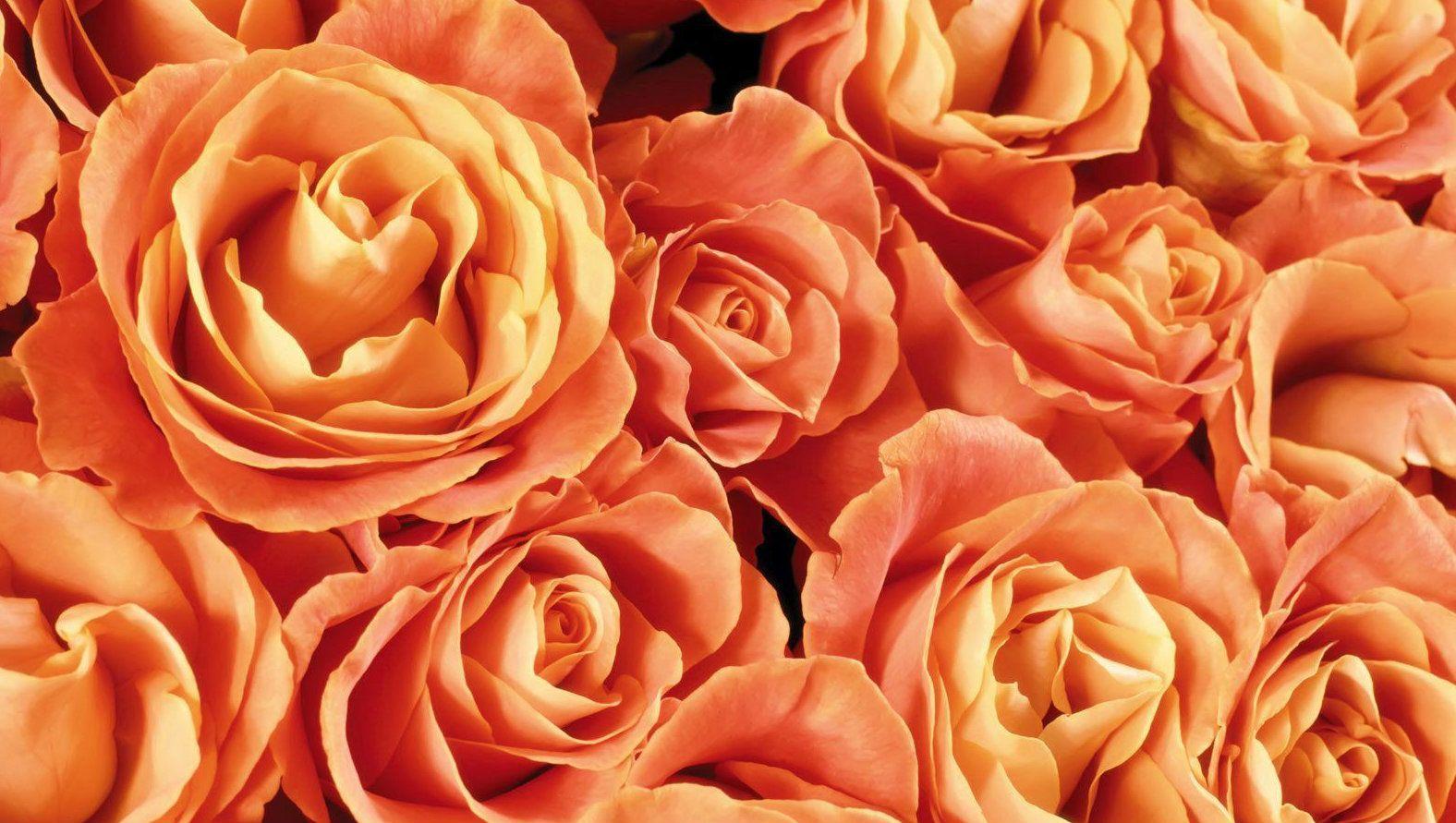 orange-roses-fs.jpg