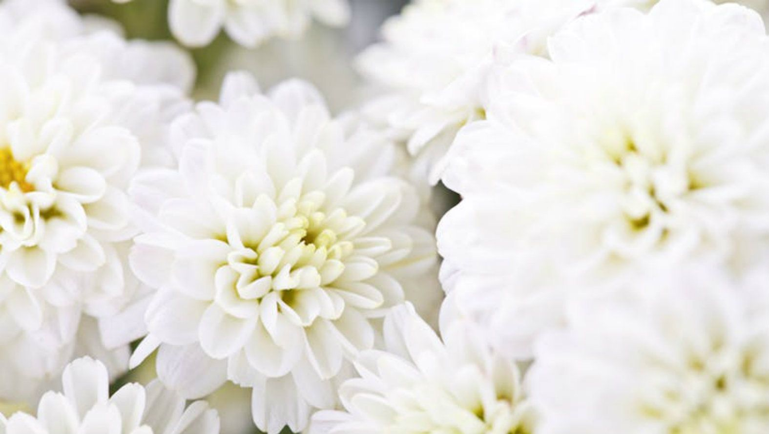 All white flowers and candle table arrangement white flowers candle izmirmasajfo
