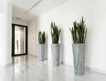Reception Plants