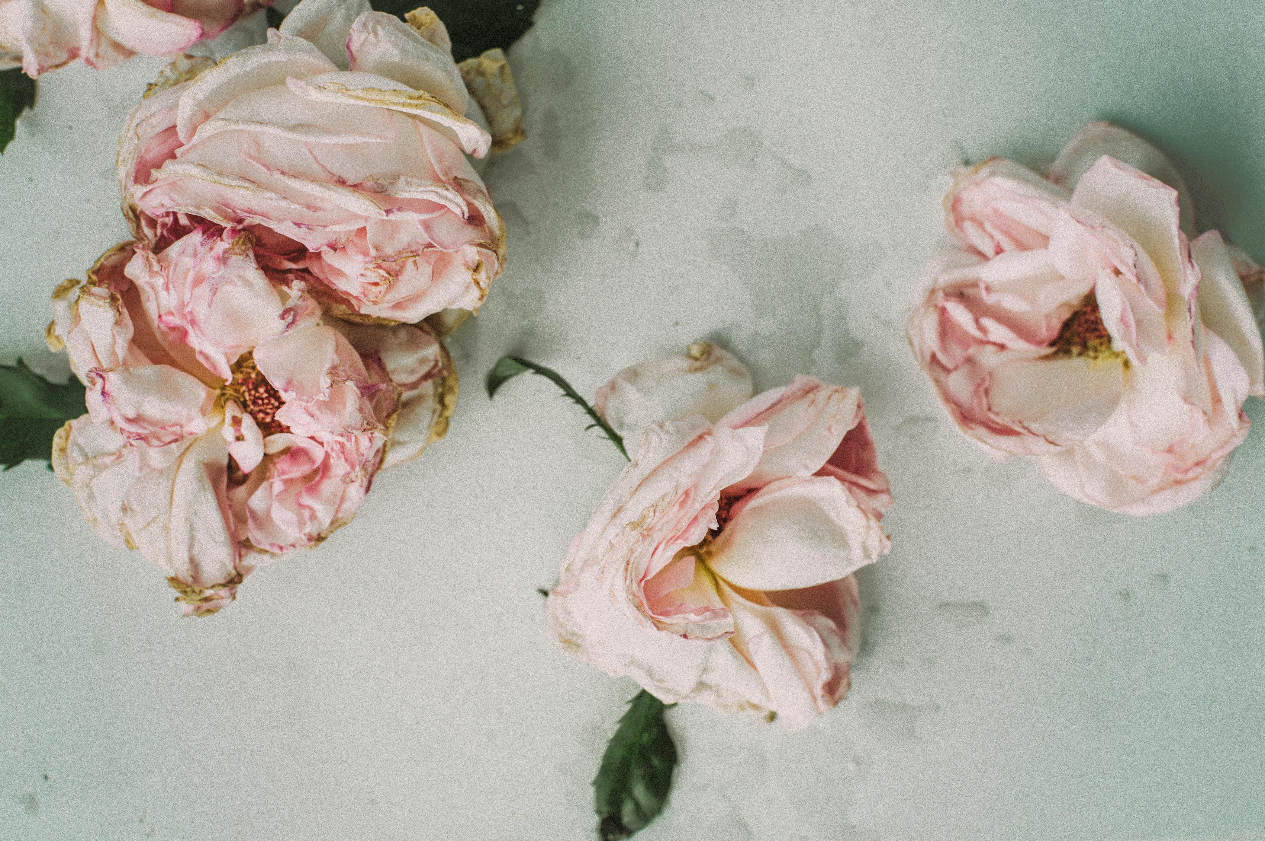 A Delicate Pink Boho Room