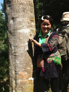 "Hmong guide in front of ""our"" cinnamon tree (50 years old, will yield 200 kg of premium (dry) medicinal grade Vietnamese Rougui in the summer; Lao Cai Province, North Vietnam"