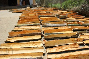 Cinnamomum loureiro Rougui drying in courtyard, North Vietnam
