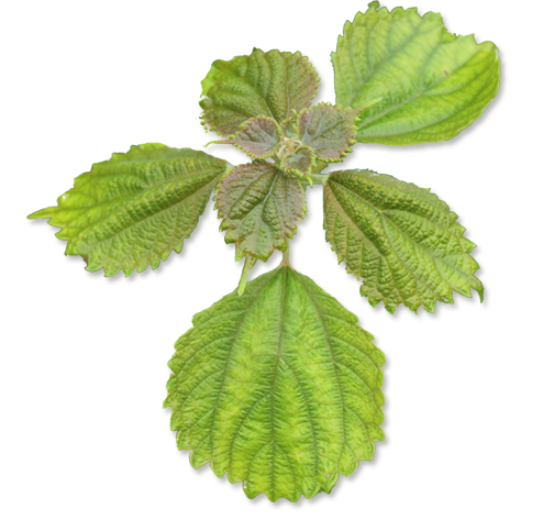 plant-1-.png