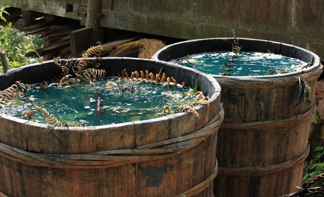hand processing of indigo (qingdai)