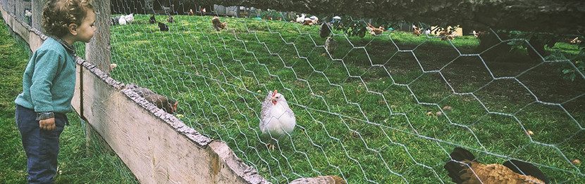 Agricultural Fencing - The Basics