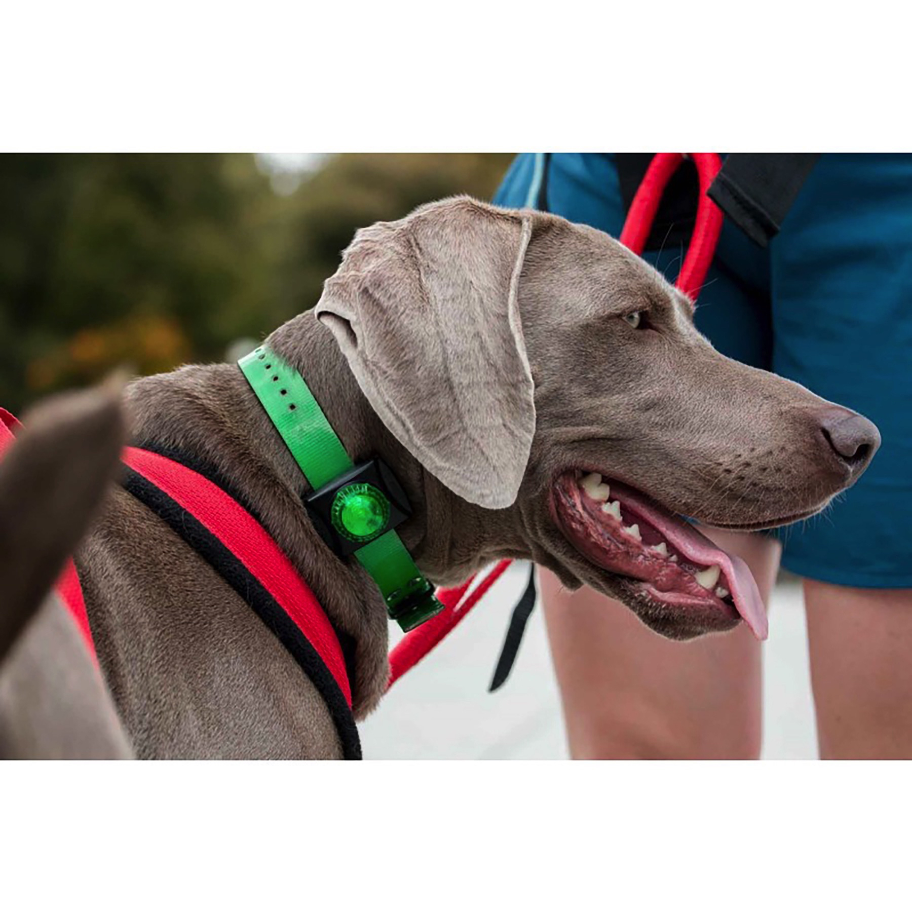 adventure lights guardian hunting dog series green led safety collar 2 pack 627569000830 ebay