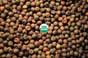 4010 Spring Field Peas 50 lbs