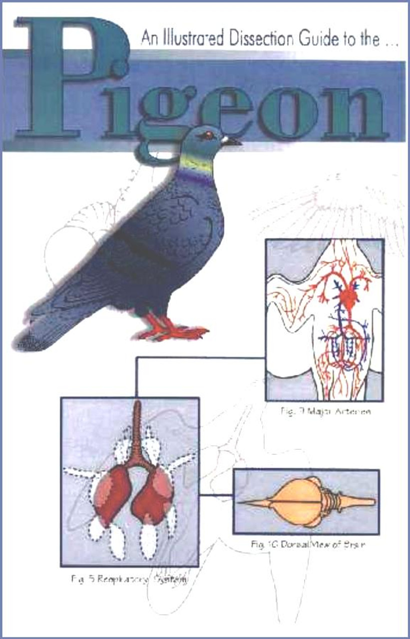 Bird Dissection Guide Pigeon