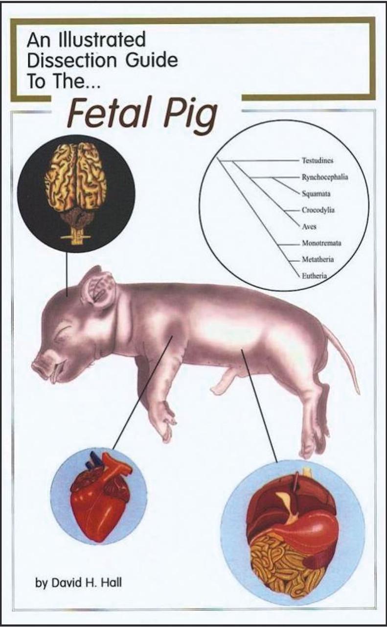 Fetal Pig Dissection Guide