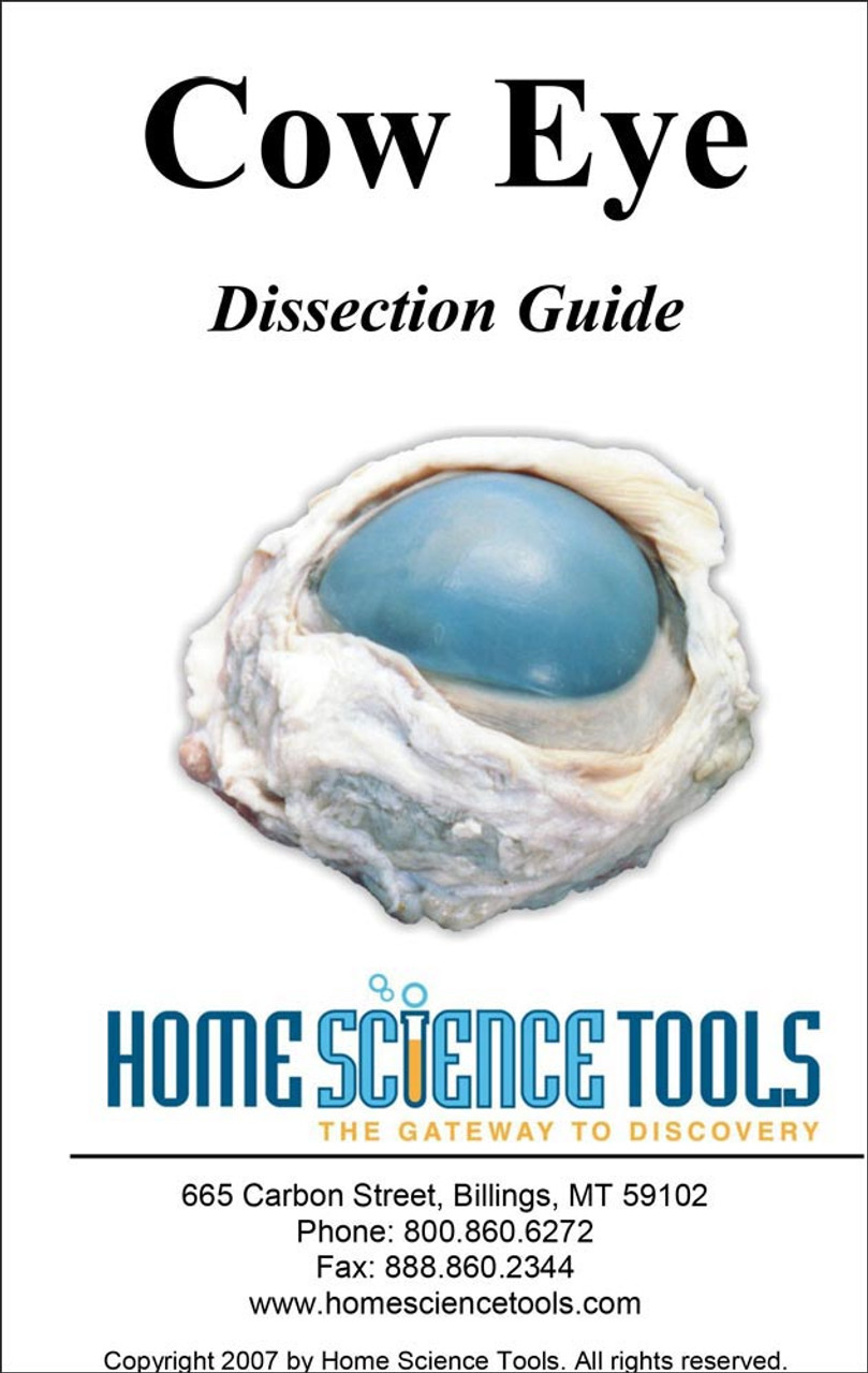 eye dissection Sheep eye dissection procedures the anatomy of the human eye can be better shown and understood by the actual dissection of an eye one eye of choice for dissection.