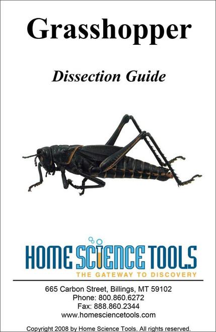 Grasshopper testis slide spermatogenesis grasshopper dissection guide ccuart Images