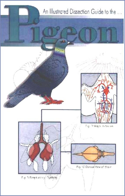 bird dissection guide pigeon rh homesciencetools com Pigeon Dissection Guide Air Sac Pigeon Dissection Labeled