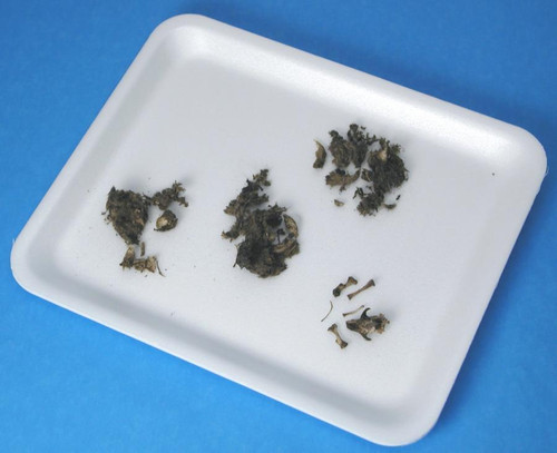 Owl Pellet, large, with instructions