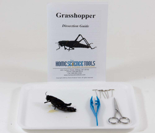 Grasshopper Dissection Kit – Grasshopper Dissection Worksheet