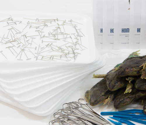 Classroom Frog Dissection Kit