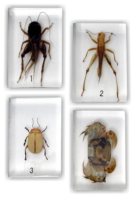 Micro Mount Specimens Set 4