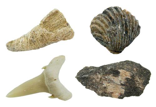 Fossil  Starter Set, 4 specimens